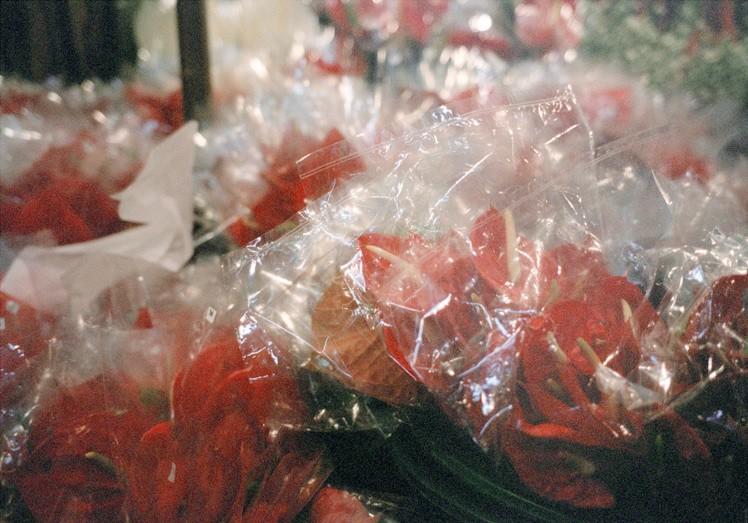 http://www.weihsinyen.com/files/gimgs/th-15_15_Untitlted(Plastic_flower)_w.jpg